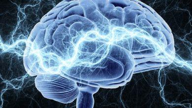 Цікаві факти про людський мозок