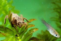 Photo of Пестициди знищують грунтових хробаків та прісноводну фауну