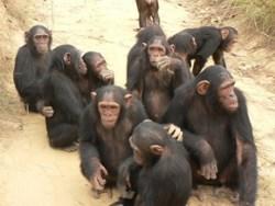 Photo of Мавпи винайшли соцмережі