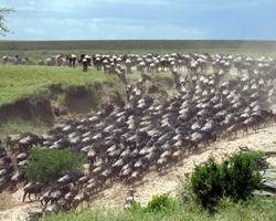 Photo of Землю чекає велика міграція тварин