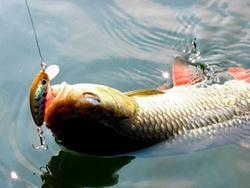 Photo of Чи відчувають риби біль?