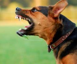 Photo of Раптова агресія у собак може свідчити про напади болю