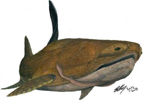 Photo of Предок сучасних риб був беззубим