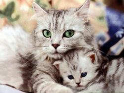 Кішки стали домашніми в Китаї 5000 років тому - як і чому?