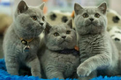 Вчені з'ясували, чому кішки ігнорують господарів