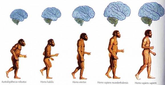 Photo of Чи триває в даний час еволюція мозку або вона досягла логічної межі?