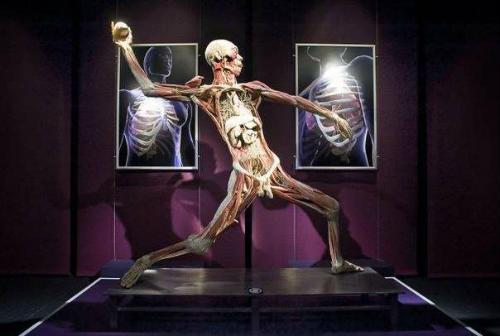Photo of «Шрами» еволюції на тілі людини