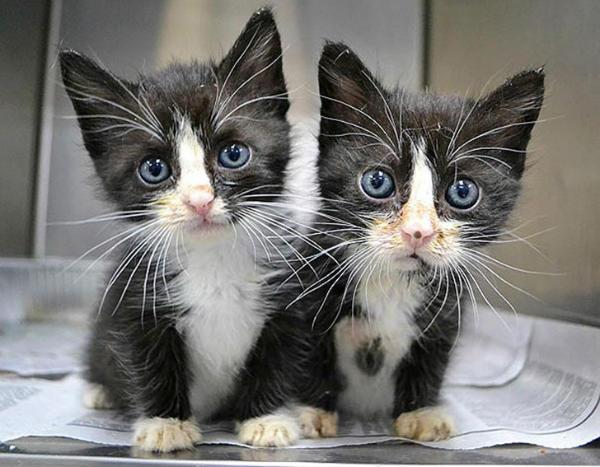 Photo of Чарівні тварини-двійнята