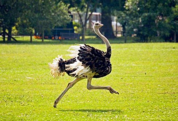 Photo of Вчені: роботи майбутнього будуть схожі на страусів