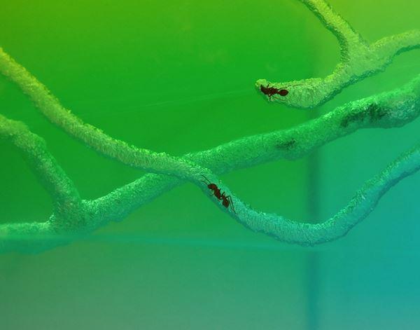 Photo of Мурашине мистецтво: полотна з живими комахами всередині