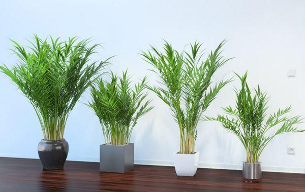Photo of Ці рослини — прекрасна альтернатива очищувачам повітря