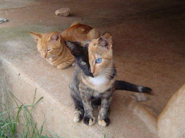 Photo of Мабуть найкрутіший кіт у світі (фото)