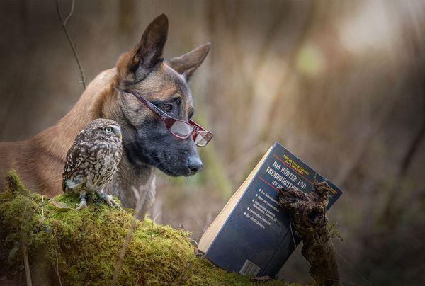 Photo of Собака — найкращий друг … сови (фото)