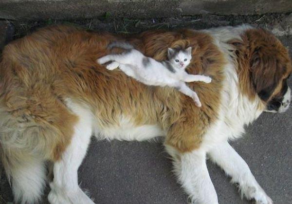 Photo of Ці коти точно розбираються в м'яких подушках!  (фото)