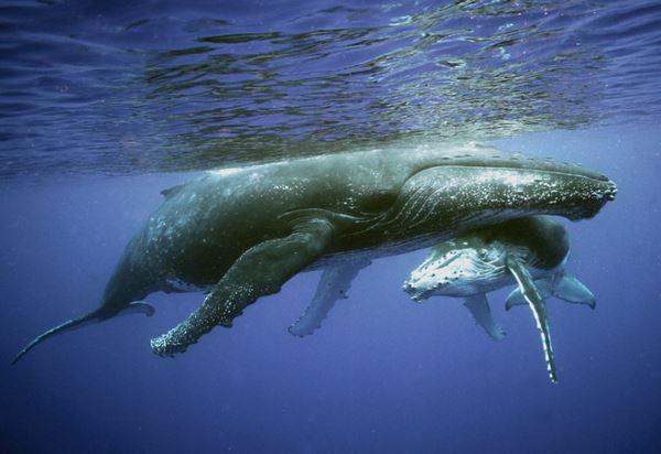 Photo of Морські ссавці збільшилися в 150 разів