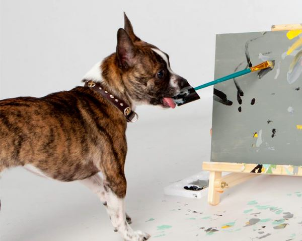Photo of Собака заробляє створенням картин