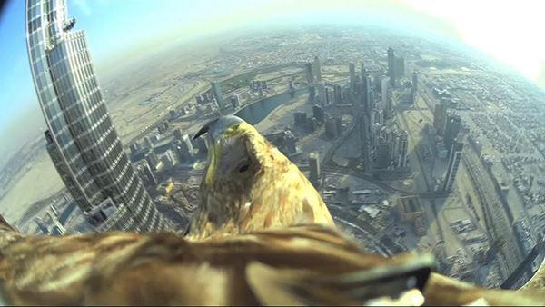 Photo of Політ з висоти 820 метрів очима орла (відео)