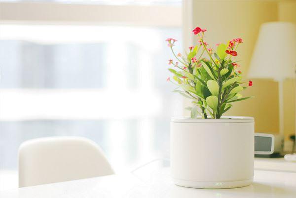 Photo of Plenty — розумний горщик сам підляє рослини