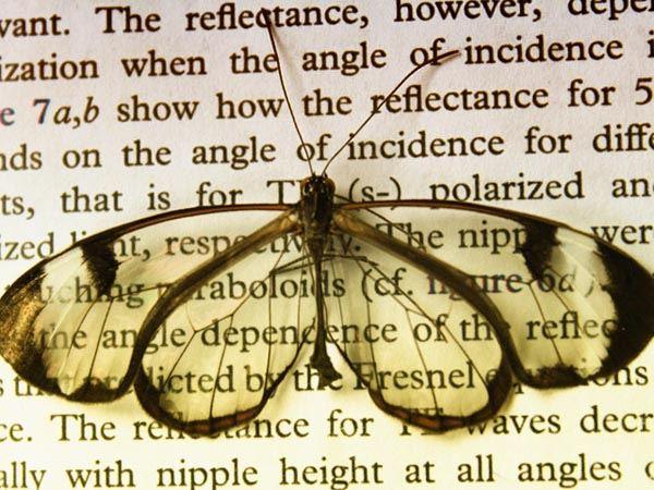 Photo of Крила метелика допоможуть створити покриття проти блиску екранів