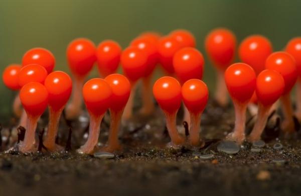 Photo of Невидимі лісові мешканці