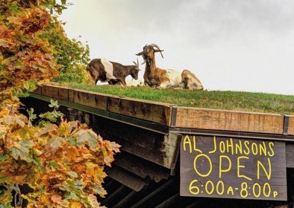 Photo of Ресторан з козами на даху (фото)