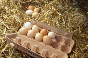 Photo of Курячі яйця нормалізують роботу серцево-судинної системи