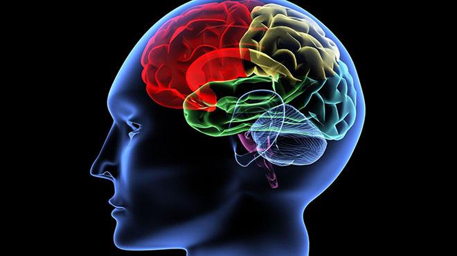 Photo of Експерти із США навчилися омолоджувати головний мозок людей