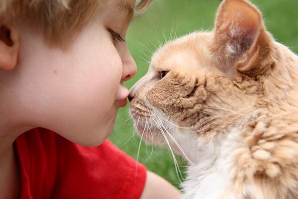 Photo of Сусідство з кішкою може зробити дитину дурнішою