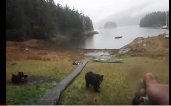 Photo of Туристка і ведмідь (відео)