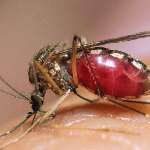 Photo of Вчені: Смертоносний вірус Зіку з'явився після дослідів 2012 року