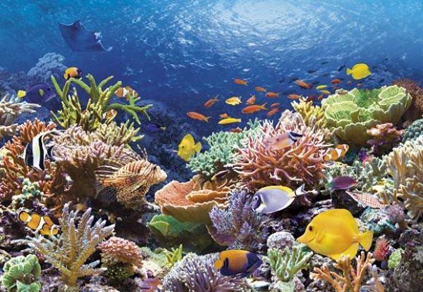 Photo of В Японії гинуть коралові рифи (відео)