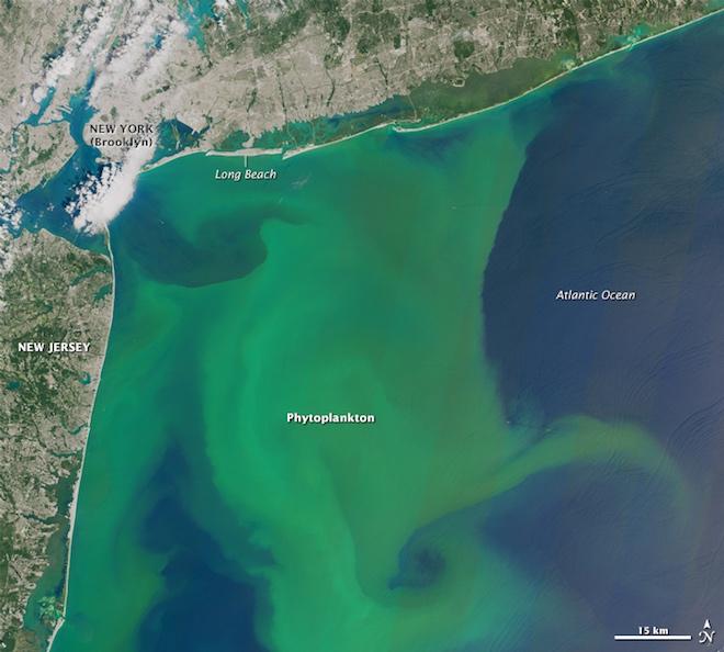 Photo of Токсичні водорості отруюють узбережжі США