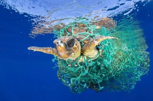 Photo of ООН починає кампанію по боротьбі з пластиковим сміттям в океані