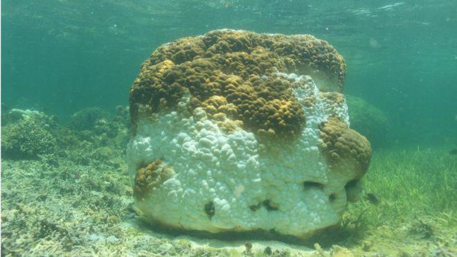 Photo of У Південно-Китайському морі масово гинуть корали