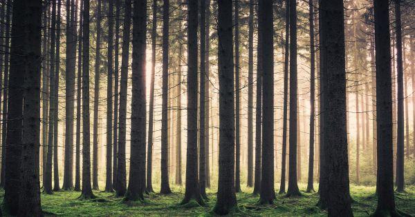 Photo of Озеленення планети знизить вміст вуглекислого газу в атмосфері