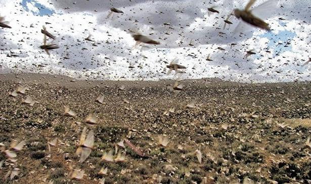 Photo of На Землі почався «екологічний Армагеддон»