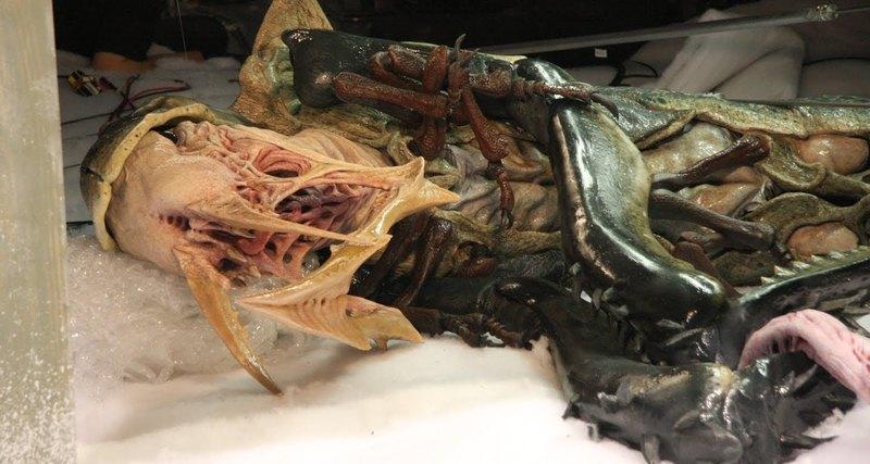 Photo of В Арктиці знайшли справжнього монстра