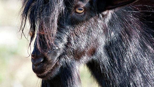Photo of У Нігерії місцевого чаклуна побили за перетворення людини в козла