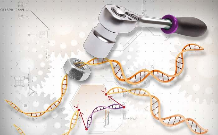 Photo of У Китаї почали масово редагувати ДНК людей