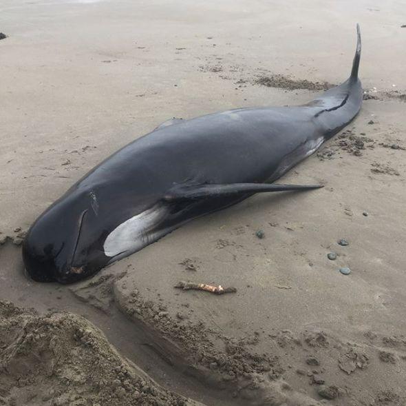 Photo of У Канаді врятували кита (фото)