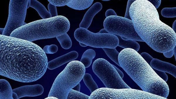Photo of Еволюція бактерій в реальному часі (відео)