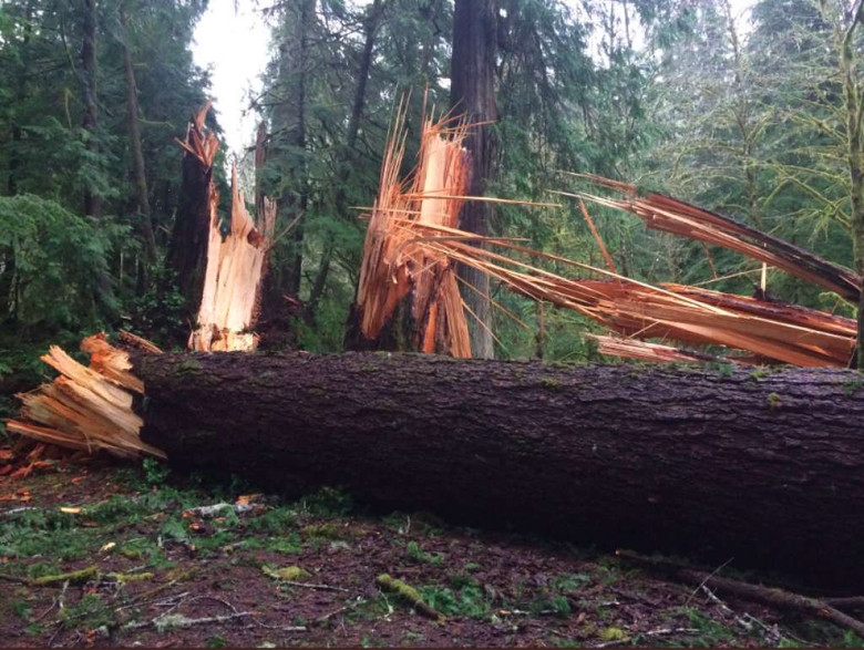 Photo of Понад сто дерев у штаті Вашингтон повалено загадковою силою