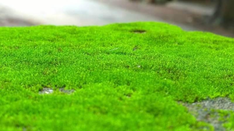 Photo of Вчені виявили, що зелений мох може бути корисний для здоров'я