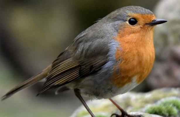Photo of У пташиних очах виявили вбудований біокомпас