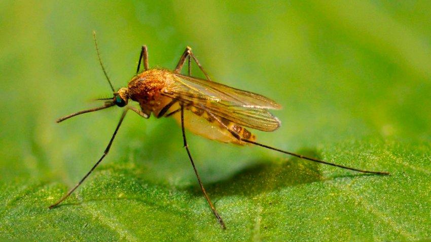 Photo of Вчені отруїли кров людей для боротьби з комарами
