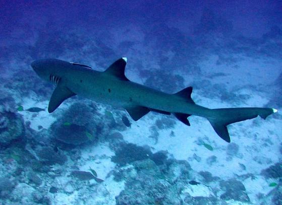 Photo of В Австралії на пляжі знайдені рідкісні зуби доісторичної мега-акули
