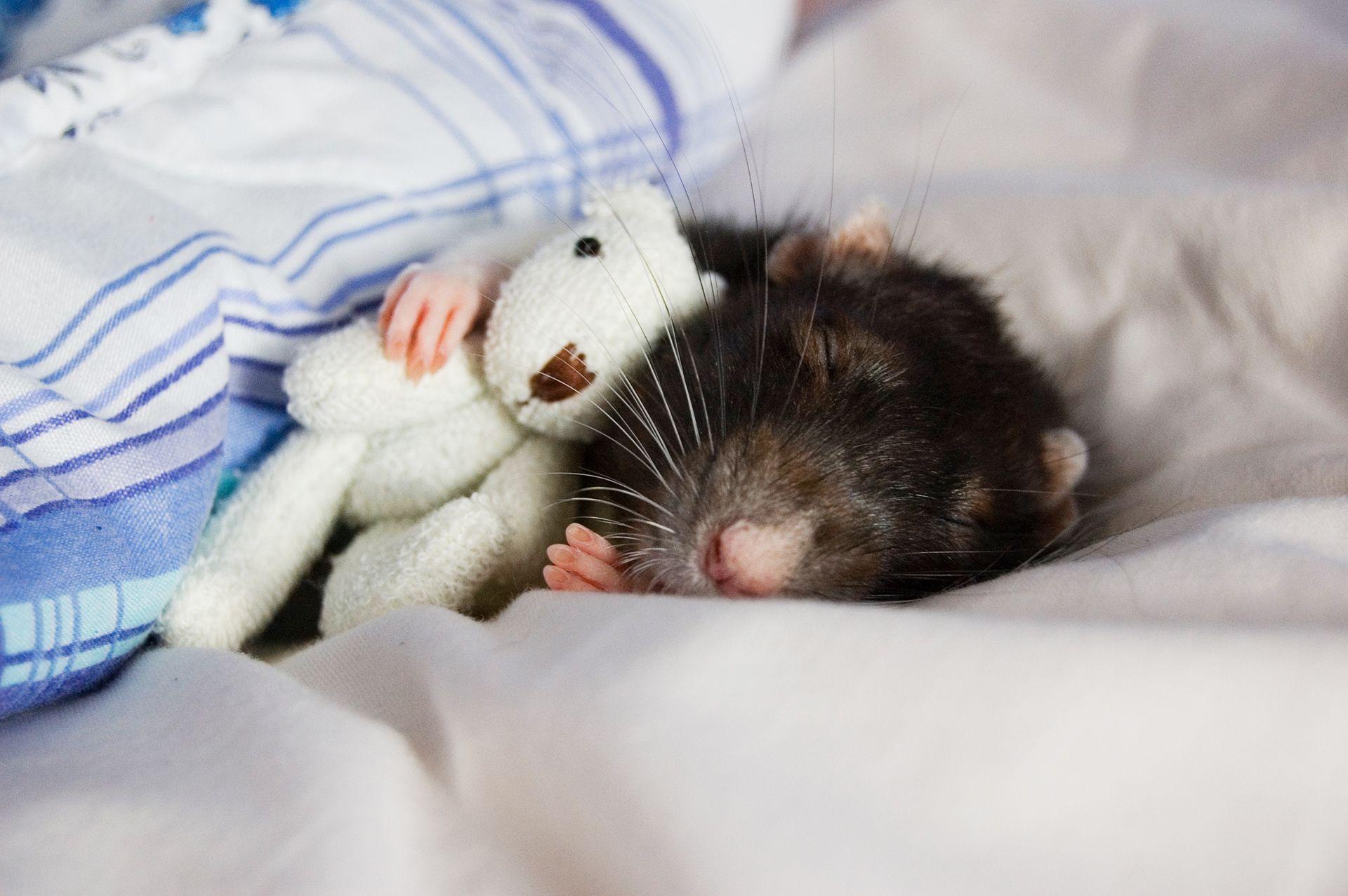 Photo of Вчені виявили гени, необхідні для сновидінь