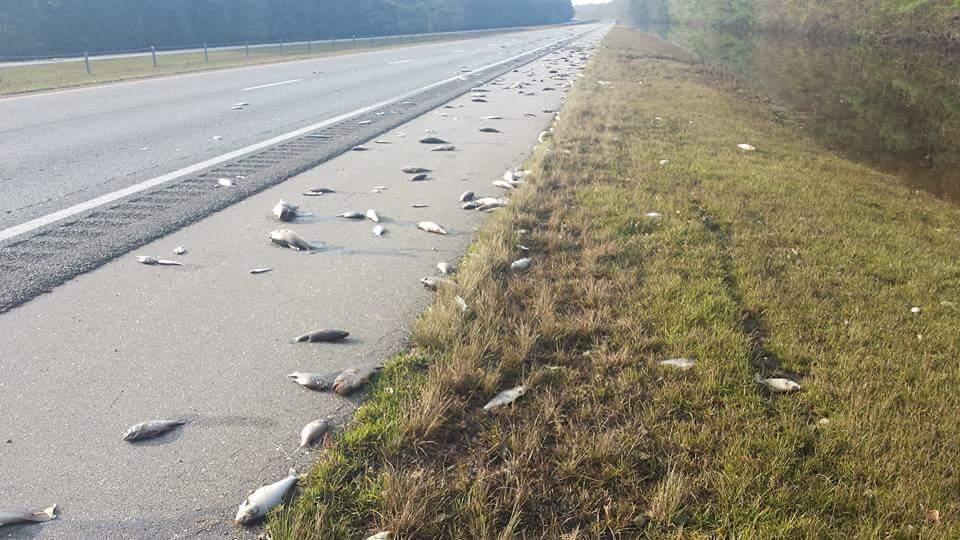 Photo of Ураган «Флоренс» залишив на автотрасі сотні мертвих риб