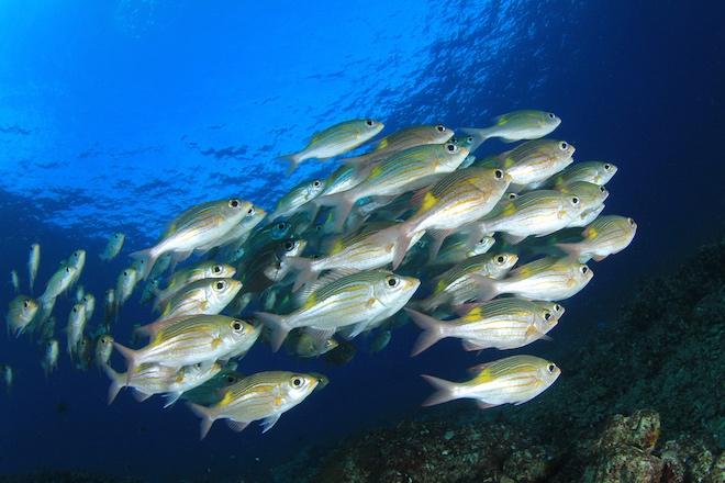 Photo of У 80% риб Амазонки виявлені сліди забруднення пластиком
