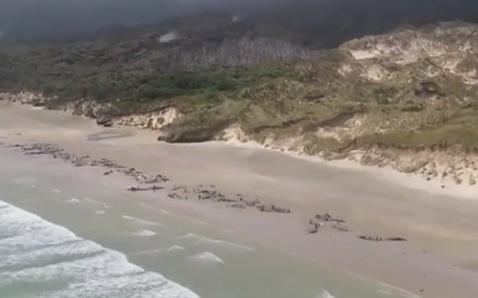 Photo of У Новій Зеландії 145 дельфінів викинулися на берег
